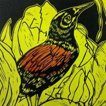 Tieke Bird - Caroline Jackman