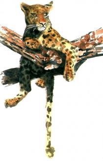 Leopard in Tree - Chris Blessington